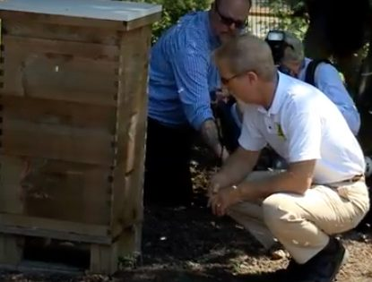 New Certification for Bee-Friendly Farms