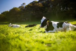 Report Showcases Benefits of Organic Dairy
