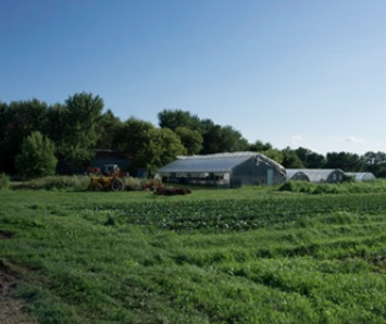 REPORT: Is Organic Farming Risky?
