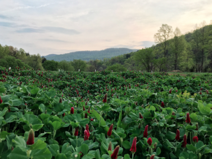 HIRING: Full or Part-time Manager – OB West Farms