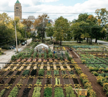 USDA Grants Available for Urban Agriculture and Innovative Production